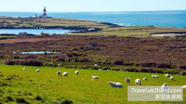 巴德西岛上羊的数量远远超过了人类居民的数量——这也正是这座岛的魅力所在。