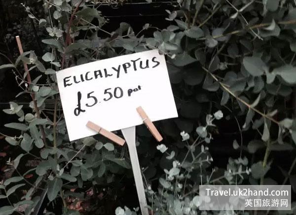 伦敦的尤加利叶,不到50一扎,比北京莱太都便宜!