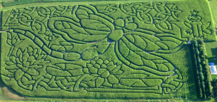 Dragonfly maze, Bourton-on-the-Water, Gloucestershire