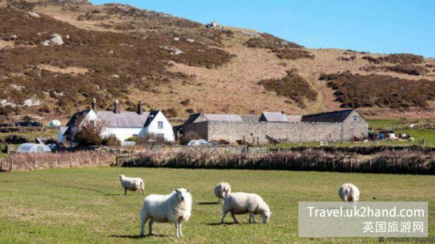 绵羊以缓慢的步伐经过岛上的房屋;九座不同样式的巴德西住宅出租给了观光游客(图片来源:Amana Ruggeri)
