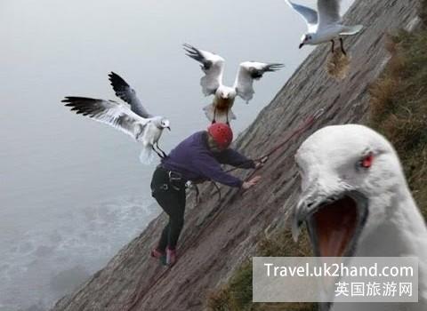 可怕的英国海鸥