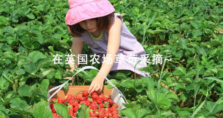 小朋友在采摘水果