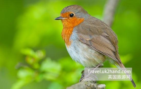 a-little-bird.jpg