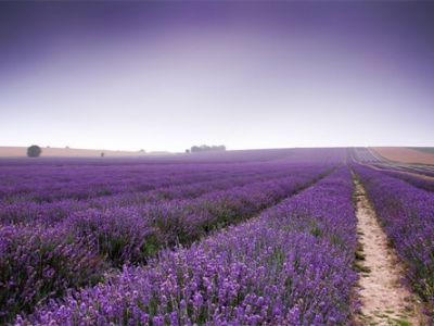 hitchin-lavender-blog-post1.jpg